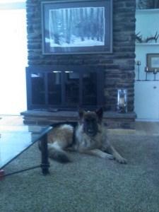 Ava Female Dog Vonsila Kennels
