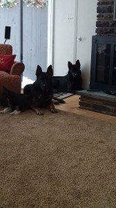 Past Puppies Vonsila Kennels