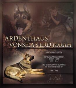 Lord Jorah of VonSila Kennels Male German Shepherd