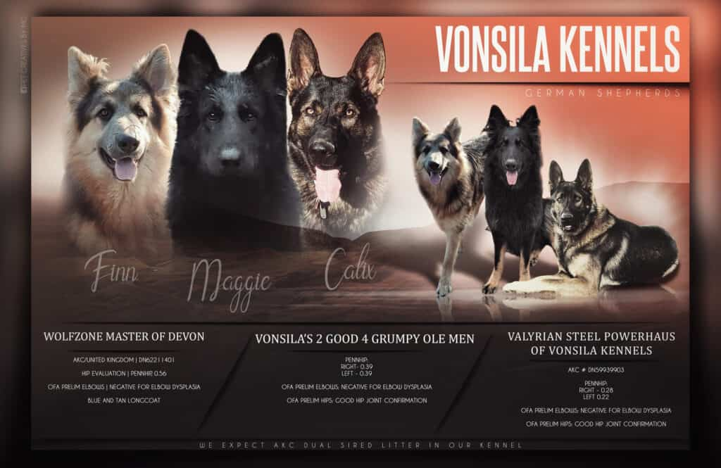 Vonsila kennels - up coming litters