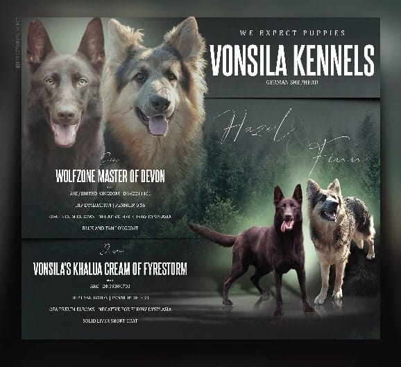 Vonsila-kennels-litter-announcement