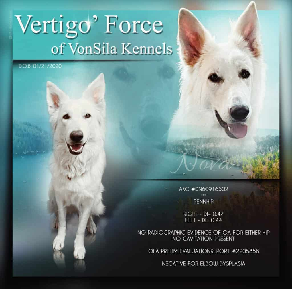 """Vertigo's Force of VonSila Kennels/ aka """"Nova"""" (Kim Novak)"""