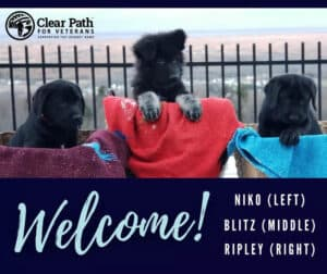  Picture of Blitz introducing him to Clear Path